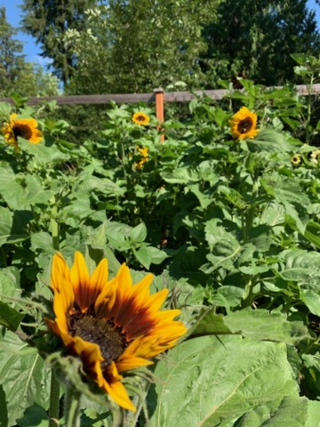 Farm is open Wed through Sun, 9 am to 6 pm; Date-night picking event Friday evening from 6 to 8 pm.